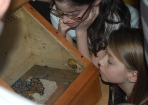 Fifth grade classes at Conestoga Elementary learns about bees