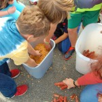 Shelling corn for the corn relay race