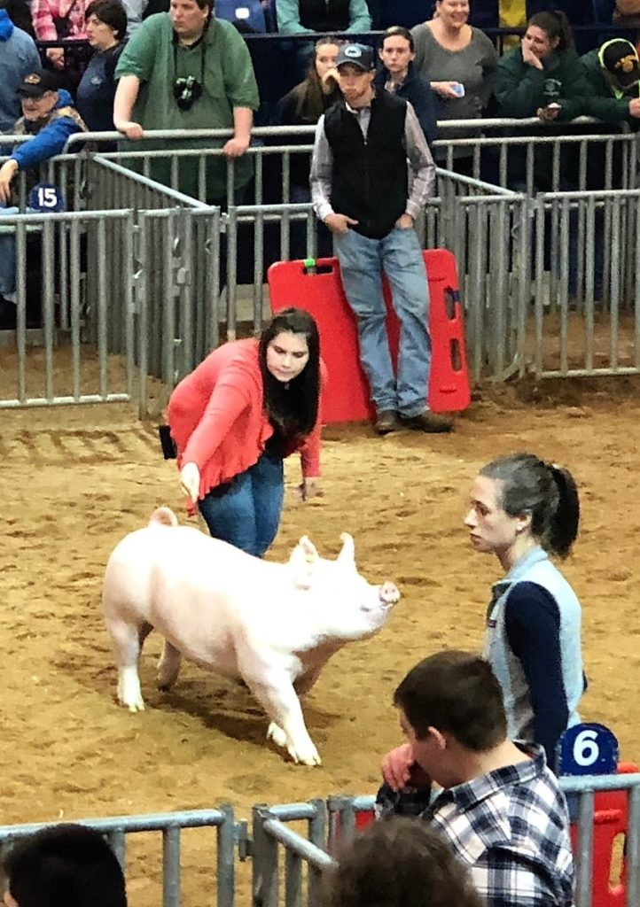 Jenna Smith with Champion Yorkshire hog.