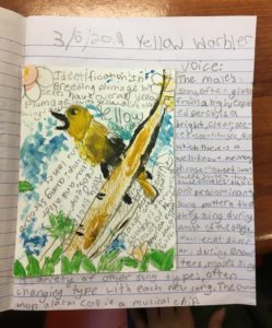 A student rendering of a yellow warbler.