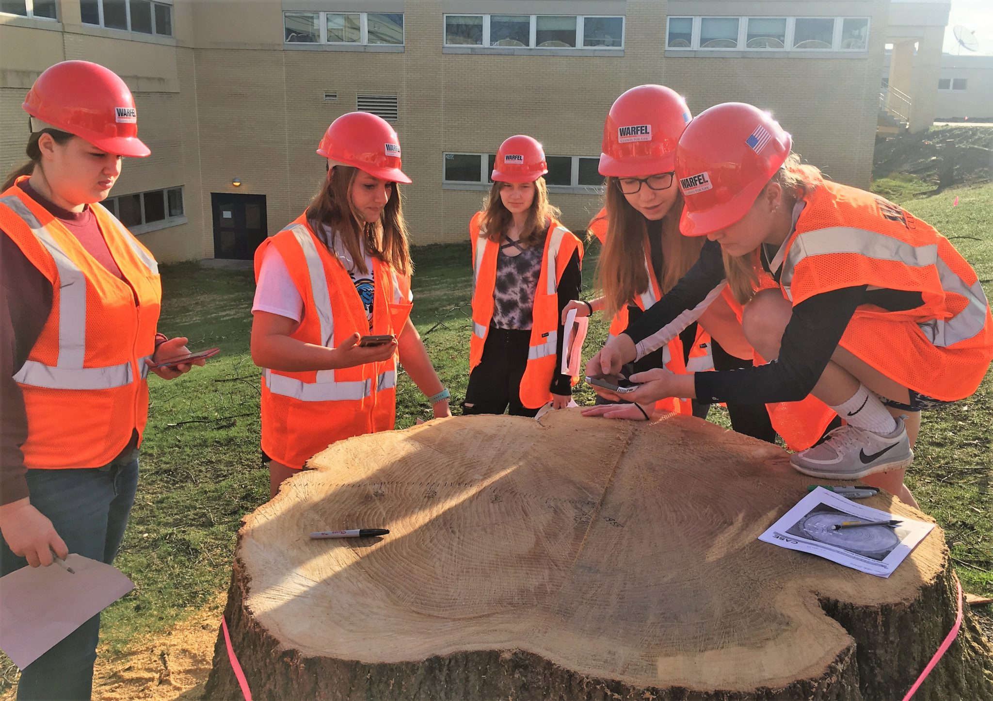 Plant Science students examining the rings on a tree stump.